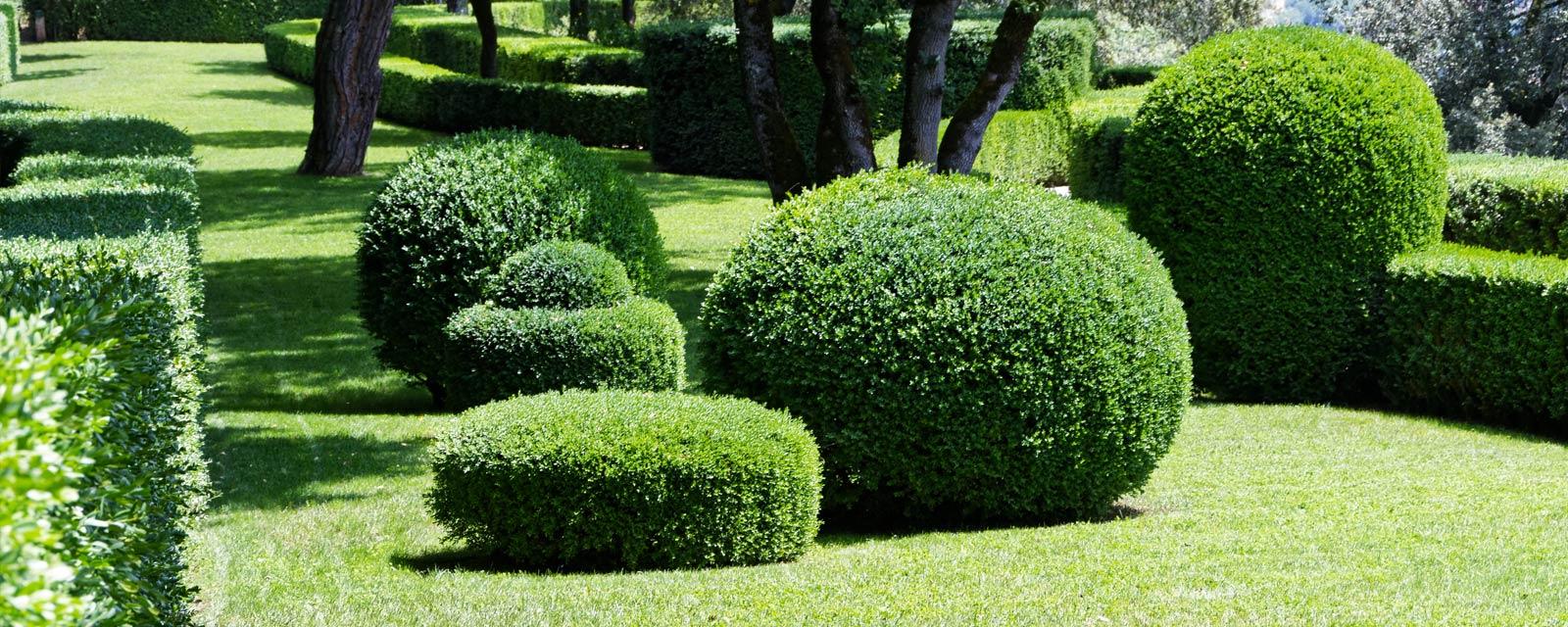 A Quelle Periode Tailler Les Lauriers quand et comment tailler ses arbustes ? | guide artisan